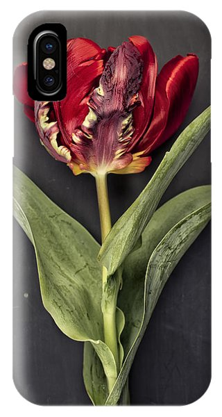 Tulip iPhone X / XS Case - Tulip by Nailia Schwarz