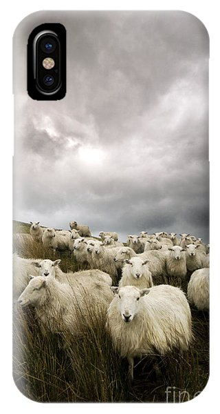Farm iPhone Case - Welsh Lamb by Angel Ciesniarska