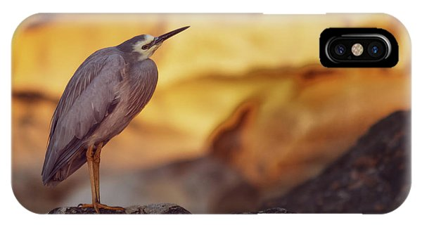 White-faced Heron At The Beach IPhone Case