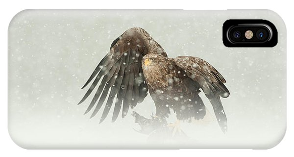 White-tailed Eagle IPhone Case