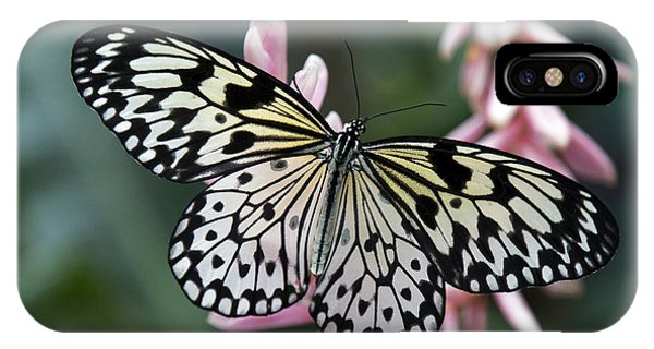 White Tree Nymph Butterfly IPhone Case