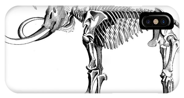 Bone iPhone Case - Woolly Mammoth Skeleton by English School