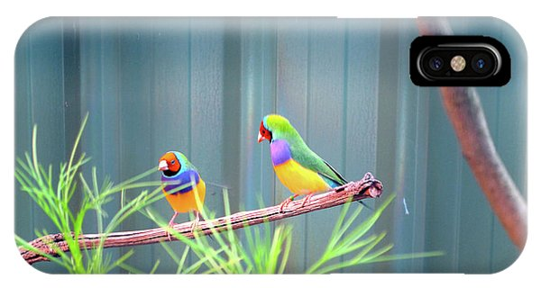 Aussie Rainbow Lovebirds IPhone Case