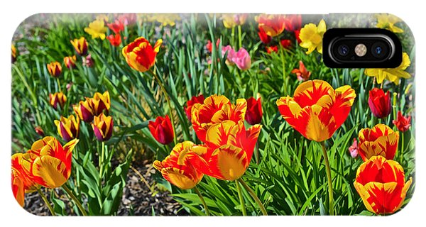 2015 Acewood Tulips 1 IPhone Case
