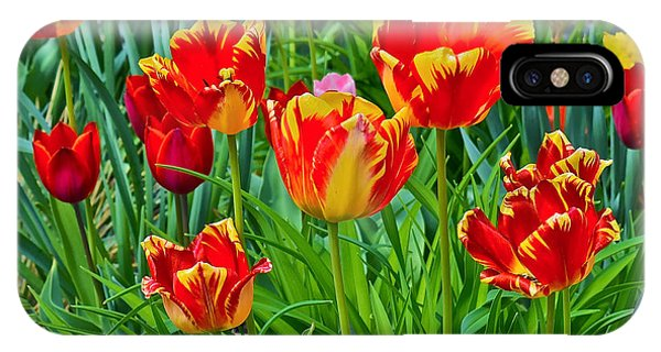 2015 Acewood Tulips 6 IPhone Case