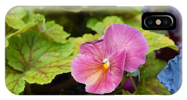 2015 After The Frost At The Garden Pansies 3 IPhone Case