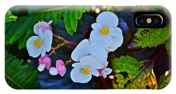 2015 Early September At The Garden Begonias IPhone Case