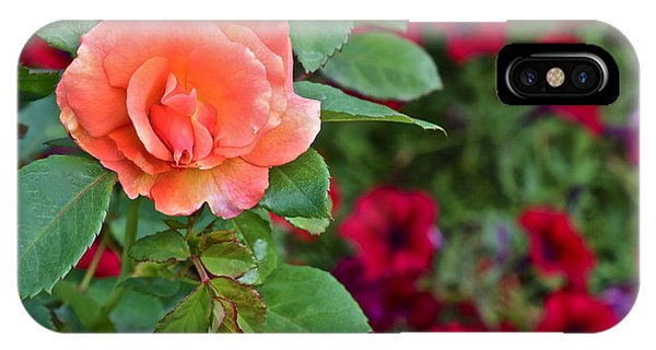 2015 Fall Equinox At The Garden Sunset Rose And Petunias IPhone Case