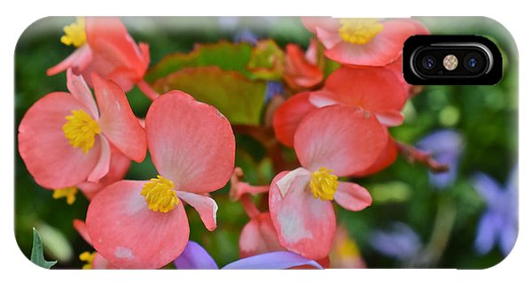 2015 Mid September At The Garden Begonias 2 IPhone Case