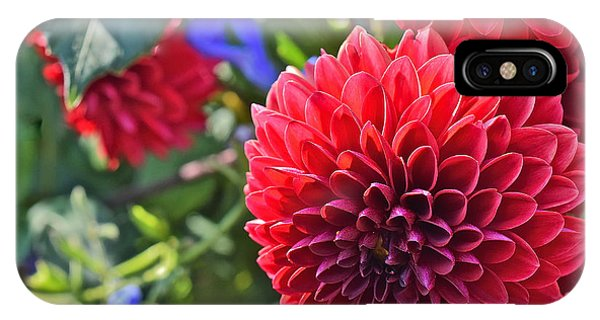 2015 Mid September At The Garden Dahlias 2 IPhone Case