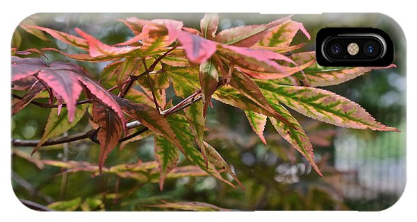 2015 Mid-september At The Garden Japanese Maple 1 IPhone Case