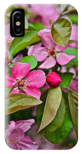 2015 Spring At The Gardens Pink Crabapple Blossoms 2 IPhone Case