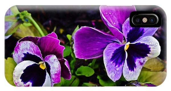 2015 Spring At Olbrich Gardens Violet Pansies IPhone Case