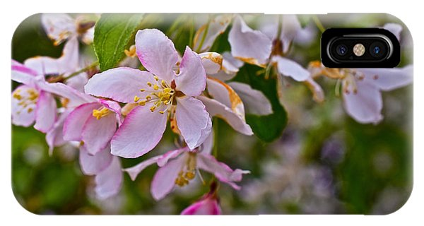 2015 Spring At The Gardens White Crabapple Blossoms 1 IPhone Case