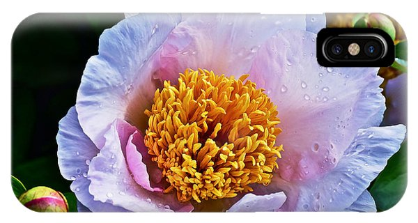 2015 Spring At The Garden White Peony  IPhone Case