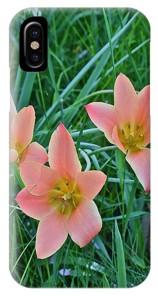 2015 Spring At The Gardens Meadow Garden Tulips 3 IPhone Case