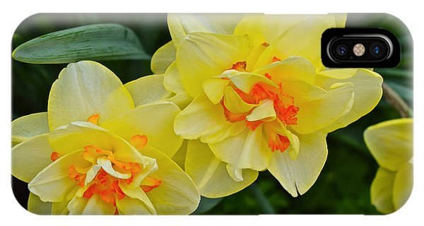 2015 Spring At The Gardens Tango Daffodil IPhone Case