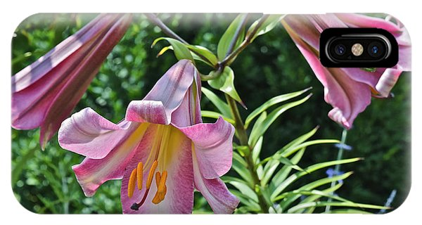 2015 Summer At The Garden Lilies In The Rose Garden 2 IPhone Case