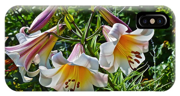 2015 Summer At The Garden Lilies In The Rose Garden 1 IPhone Case
