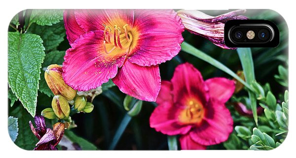 2015 Summer At The Garden Strawberry Candy Daylily 2 IPhone Case