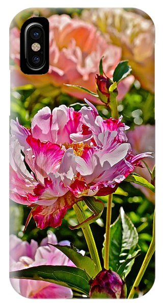 2015 Summer's Eve At The Garden Candy Stripe Peony IPhone Case