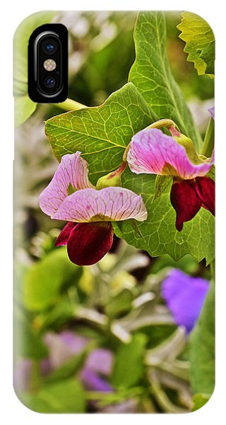 2015 Summer's Eve At The Garden Sweet Pea 2 IPhone Case