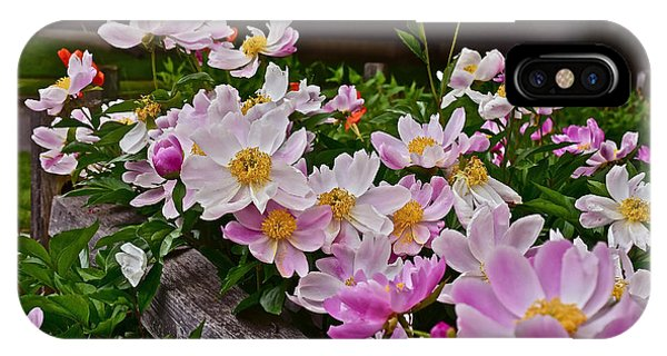 2015 Summer's Eve Neighborhood Garden Front Yard Peonies 4 IPhone Case