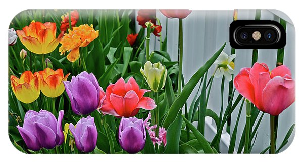 IPhone Case featuring the photograph 2018 Acewood Tulips Against The White Fence 2 by Janis Nussbaum Senungetuk