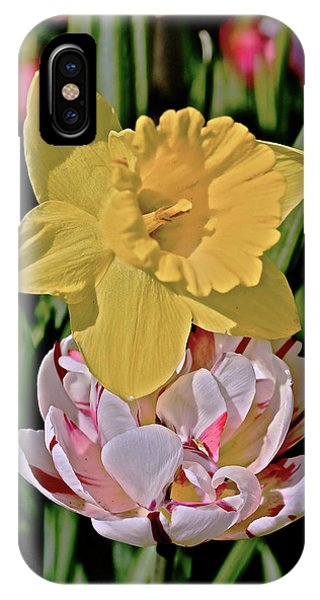 IPhone Case featuring the photograph 2018 Acewood Tulips Daffodil With Tulips by Janis Nussbaum Senungetuk
