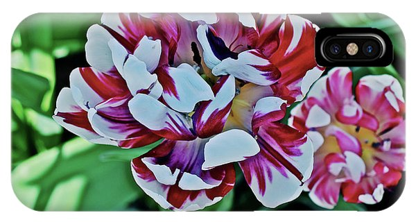 IPhone Case featuring the photograph 2018 Acewood Tulips Red And White 1 by Janis Nussbaum Senungetuk