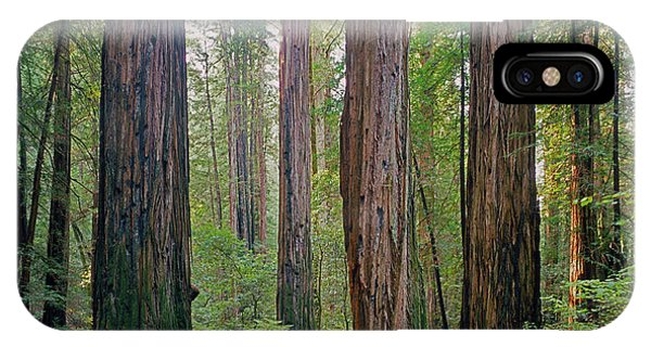 IPhone Case featuring the photograph 2b6391 Armstrong Redwoods Ca by Ed Cooper Photography