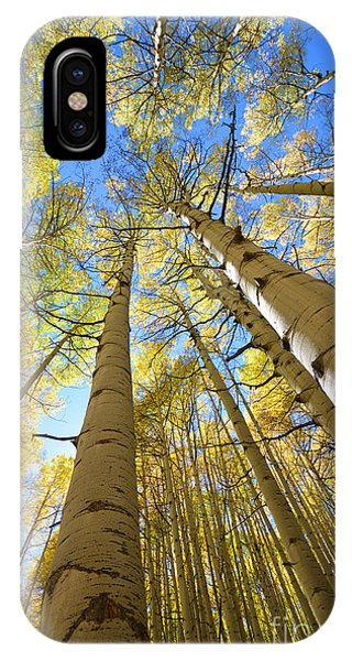 IPhone Case featuring the photograph Aspens In The Fall by Kate Avery