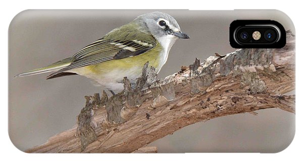 Blue-headed Vireo IPhone Case