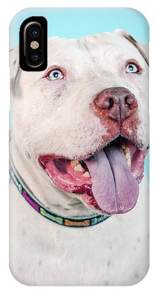 Pitbull iPhone Case - Django by Pit Bull Headshots by Headshots Melrose