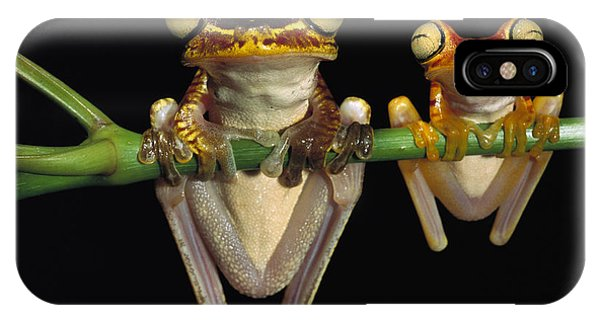 Mp iPhone Case - Chachi Tree Frog Hyla Picturata Pair by Pete Oxford
