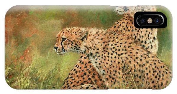 Cheetah iPhone Case - Cheetahs by David Stribbling