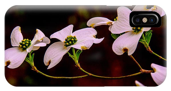 3 Dogwood Blooms On A Branch IPhone Case