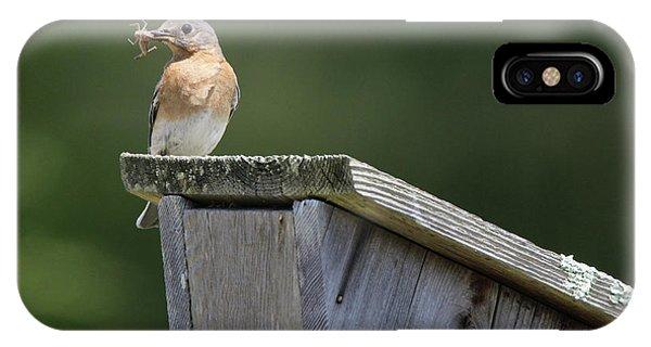 Eastern Bluebird Calverton New York IPhone Case