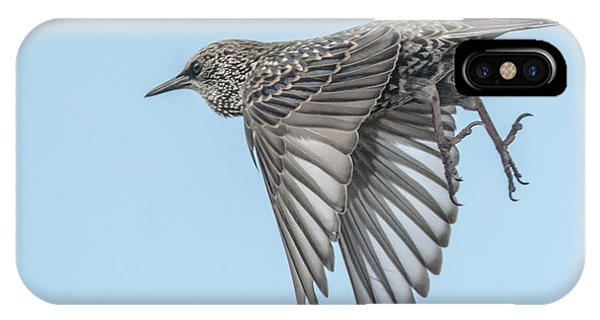 IPhone Case featuring the photograph European Starling by Tam Ryan
