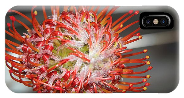 Exotic Flower IPhone Case