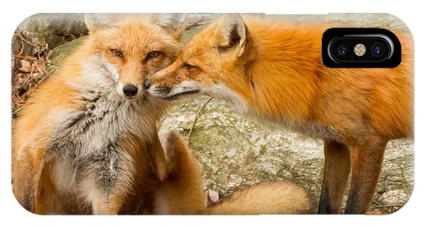 Foxes In Love IPhone Case