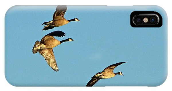 3 Geese In Flight IPhone Case