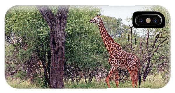Giraffes Eating Acacia Trees IPhone Case