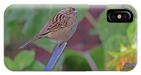 Golden-crowned Sparrow IPhone Case