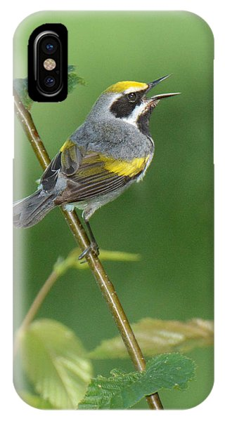 Golden-winged Warbler IPhone Case