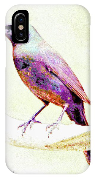 Great-tailed Grackle IPhone Case