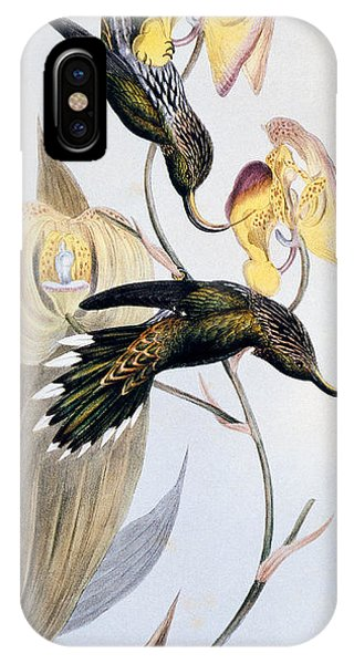 Humming Bird iPhone Case - Hummingbirds by John Gould