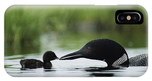 Loon iPhone Case - Loons by Michael S Quinton