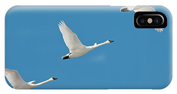 Migratory Birds iPhone Case - 3 Montana Swans by Todd Klassy