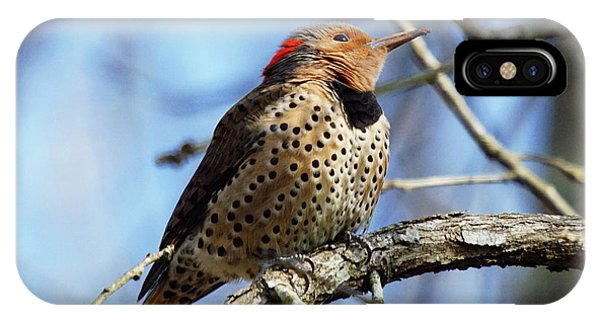 Northern Flicker Woodpecker IPhone Case